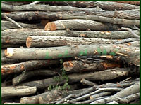 Poletimber and Sapling Fuel Material